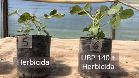 """PGG Wrightson Seeds y PROFARM presentan una novedosa alternativa biológica para tratamiento de semillas """"UBP TS"""""""